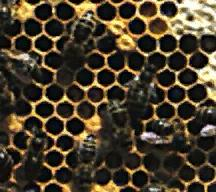 Cross Section of Hive (click to enlarge)